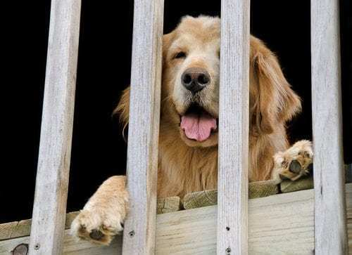 Railing Safety for Pets